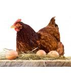 Ponedoras  | Animales de Granja | Humus Versol
