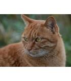 Adulto  | Gatos | Humus Versol
