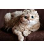 GrainFree  | Gatos | Humus Versol