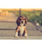 Cachorro | Perros | Humus Versol