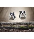 Alta Energía | Perros | Humus Versol
