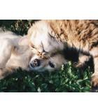 Mascotas | Humus Versol
